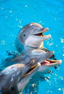 Kolmården - tre delfiner